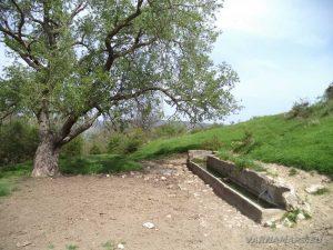 """Провадийското плато - селска чешма край местност """"Селището"""""""