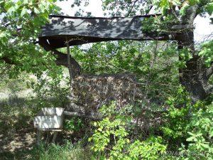 """Скален манастир """"Чукара"""" - хранилка за диви животни в гората"""