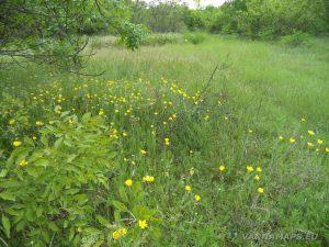 Старобългарско светилище - красива поляна с цветя по маршрута към светилището