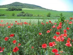 """Скален манастир """"Кара пещера"""" - красиви цветни поляни, отрупани с цветя край с. Староселец"""