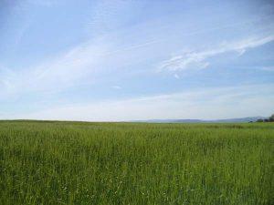 Местност Канарата - обложка