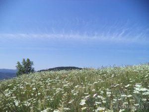 """Край язовир """"Цонево"""" - невероятно красивата природа на хълма """"Града"""""""