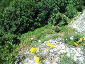 """Край язовир """"Цонево"""" - изглед от скалите в местност """"Града"""" към подножието"""