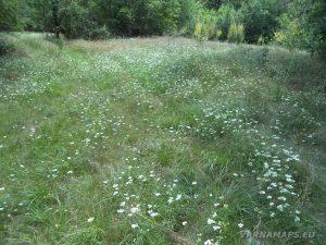 Местност Капладжата - красива поляна при мястото за пикник