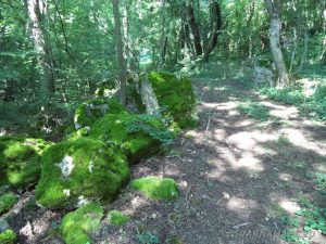 Местност Водениците - красива горска пътека, оградена със зелени камъни
