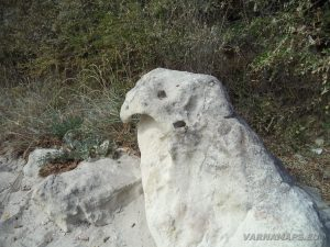 """Интересен камък на плаж """"Фичоза"""", много приличащ на папагал"""